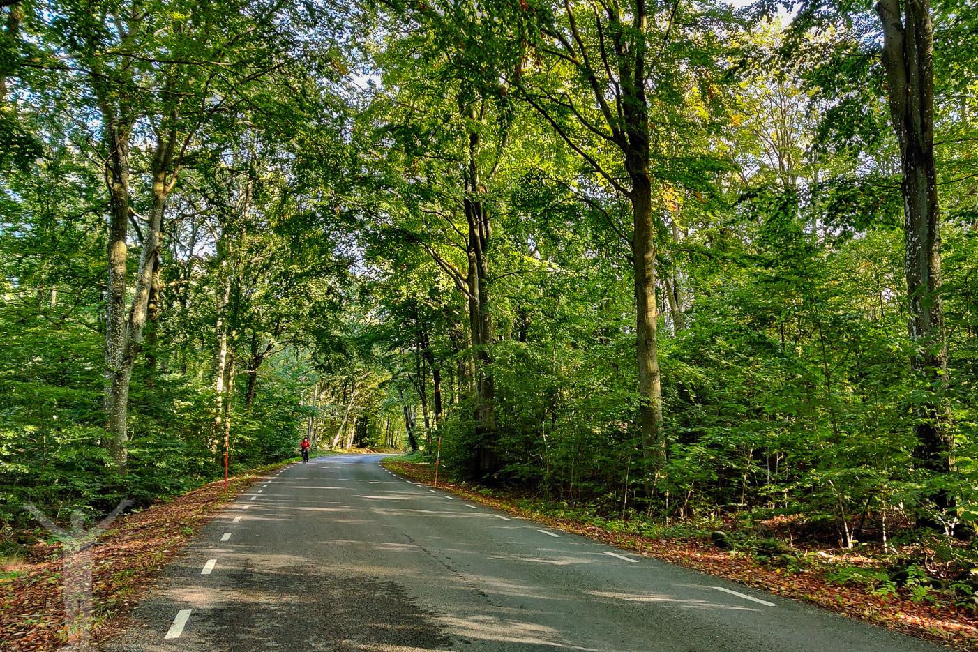 Hängande lövgrönska ovanför vägen