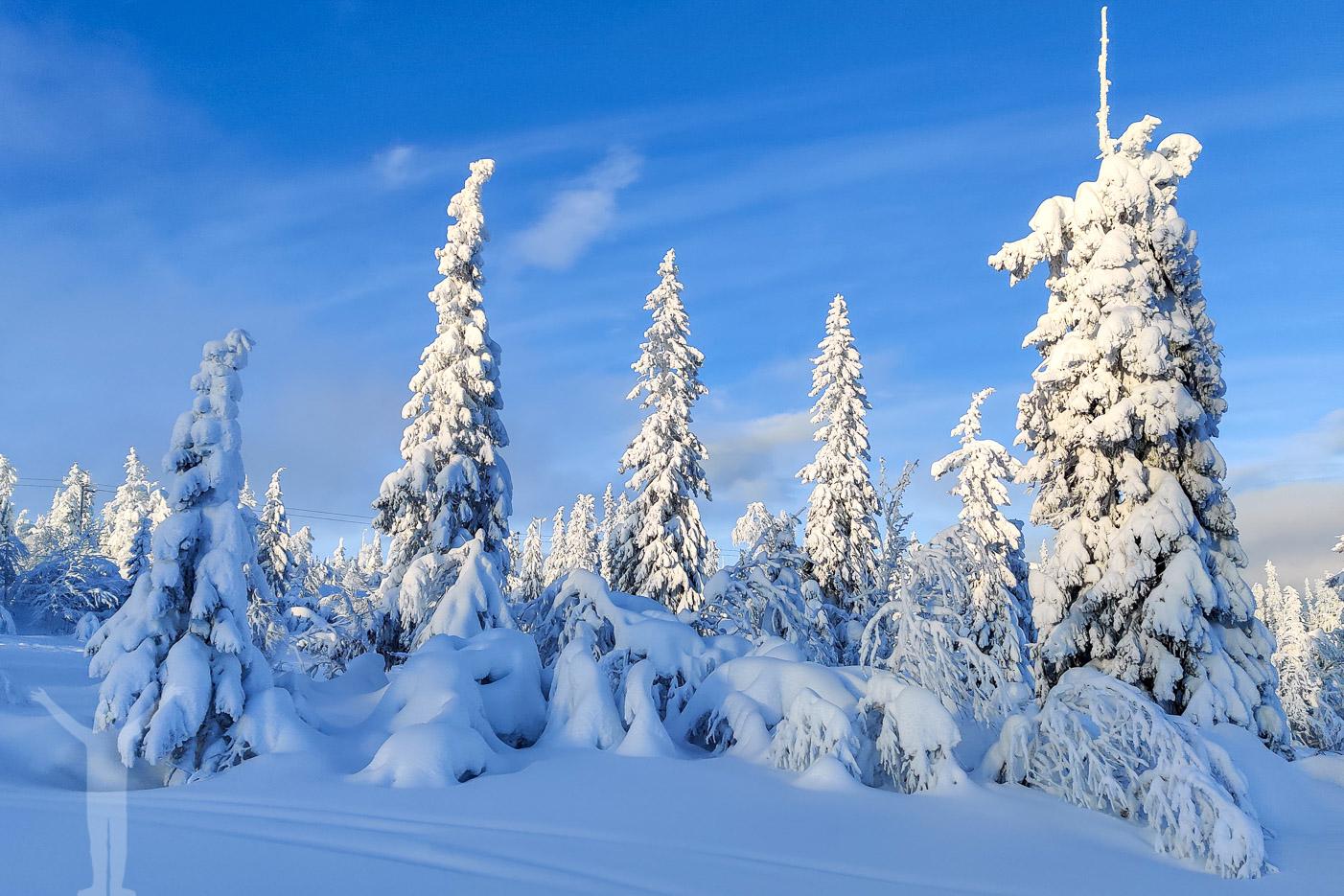 Vinteridyll i Klövsjö