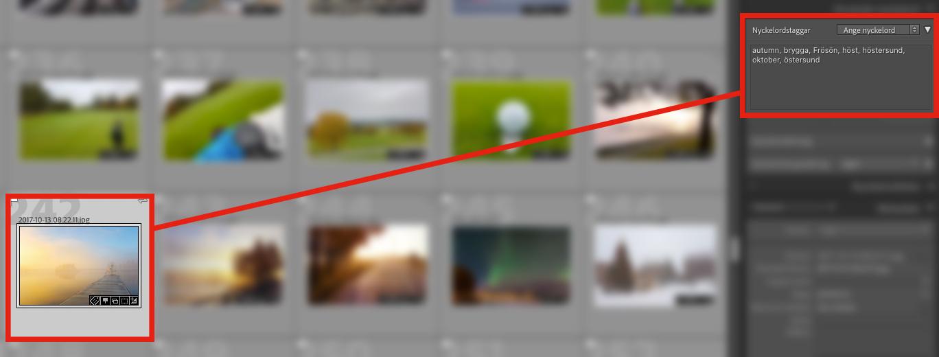 Organisera bilder i Lightroom - tagga bilder med nyckelord