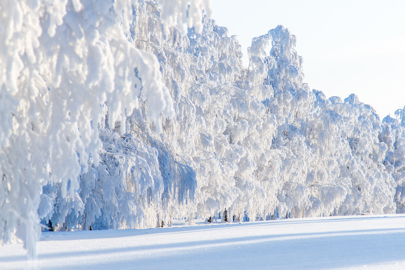 Vinterlandskap i Östersund