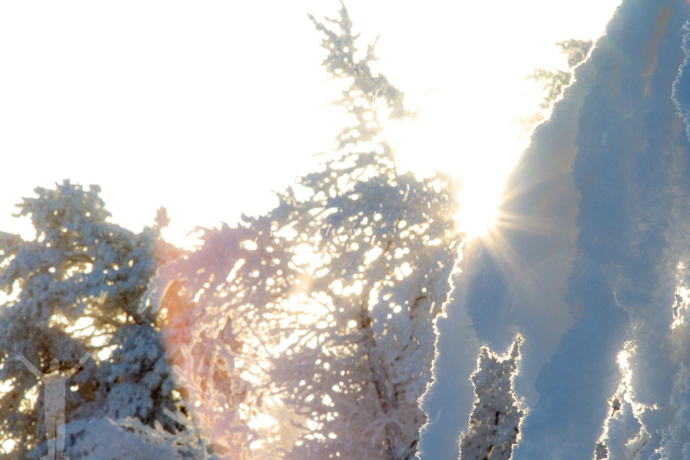 Snö i motljus